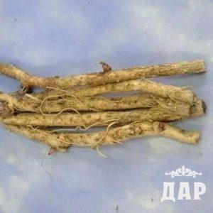 Аралия маньчжурская корни